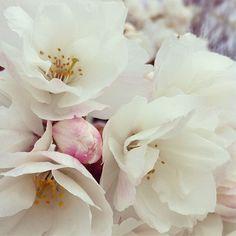 The Bedlam of Beefy: Spring Awakening