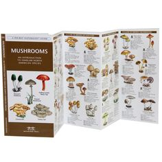 Edible Wild Mushroom Identification Guide   Mushroom Guide To North America   RailRiders