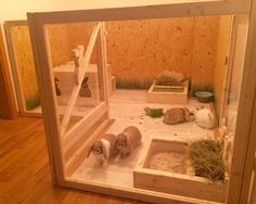 Manor pet housing for the hay rack and litter box. Indoor rabbits still need as much space as outdoor rabbit so this is still small especially for 4 rabbits I imagine