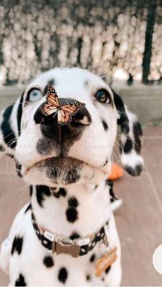 Cutest doggos ever!!!