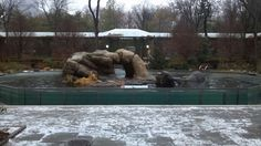 Sea lion tank at Central Park Zoo