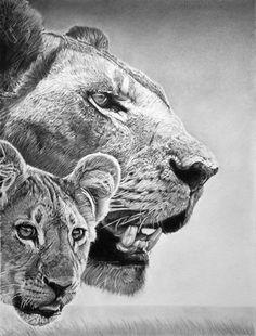 Hyper Realistic Pencil Drawings by Italian Artist Franco Clun Pencil Drawings Of Animals, Realistic Pencil Drawings, Art Drawings, Italian Artist, Pencil Illustration, Wildlife Art, Pencil Art, Gustav Klimt, Line Drawing