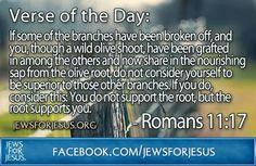 Romans 11:17