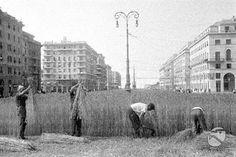 Gli orti di guerra – L'Italia tributaria dell'estero per molti prodotti agricoli, dovette mettere a coltura, tutta la terra disponibile, intensificando al massimo la cosìdetta...