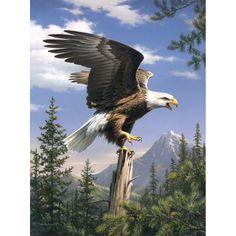 Adler - Malen nach Zahlen Vorlagen