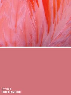 Sherwin-Williams paint color – Pink Flamingo (SW 0080)