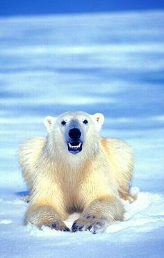 Happy Polar Bear!