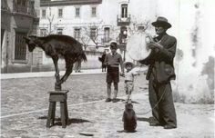 Saltimbanco performing his show at largo da Conceição, Setúbal in 1954 with a goat and a monkey. The  boys watching are the brothers Hugo And Julio (Juca) Silva.  Saltimbanco lived in poverty. Photo by the local photographer Américo Ribeiro