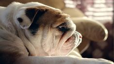 One of the best things you can do in life is get a dog, they really are mans best friend. Whether you watch them grow from a pup or rescue an older dog from a Cute Funny Animals, Cute Dogs, Bulldog Wallpaper, Cute Dog Photos, Old English Bulldog, Bulldog Puppies, Mans Best Friend, Puppy Love, Animal Rescue