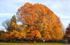 - Autumn leaves are the grand finale of the growing season. What creates all that color? It's all about photosynthesis, according to Pat Breen, Oregon State University professor emeritus of horticulture. Autumn Trees, Autumn Leaves, Oregon State University, Photosynthesis, Natural Resources, Pest Control, Horticulture, Extensions, Landscape