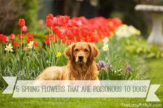 5 Spring Flowers Tha