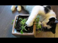 lol, That was a brand new plant less than a half hour earlier! My kitties pretty much destroyed it.with love. Just Love, Love Her, Kitty, Babies, Baby Cats, Babys, Baby, Cat, Infant