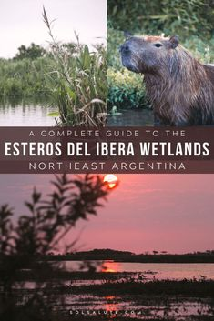 A Practical Guide to the Esteros del Ibera Wetlands in Argentina — Sol Salute Visit Argentina, Argentina Travel, Cool Places To Visit, Places To Go, South America Travel, Travel Couple, Central America, Travel Around, Travel Guides