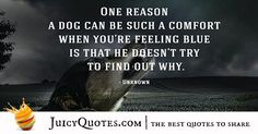 Quotes About Dogs - 46 Cute Dog Quotes, Best Quotes, Cute Dogs, How To Find Out, Love You, Feelings, Te Amo, Best Quotes Ever, Je T'aime