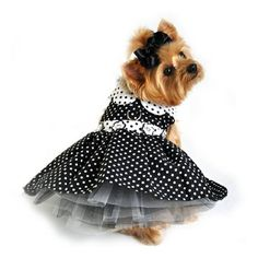A very girly polka-dotted harness dress for small dogs.