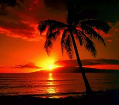 Beauiful sunset with plam tree