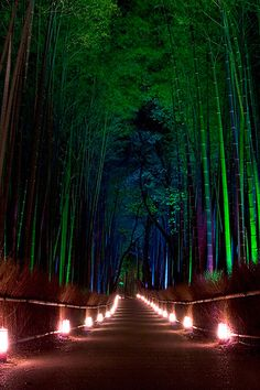 Sagano Bamboo Forest In Arashiyama Japan