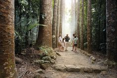 There's a lifetime of history to absorb in the fairytale, heritage-listed Paronella Park in Tropical North Queensland. Here's how to do it all in one day Holiday Places, Places Of Interest, Sunshine State, Cairns, Wander, Trip Advisor, Fairy Tales, Road Trip, Places To Visit