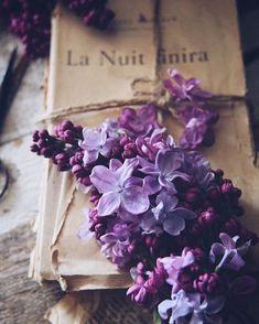 Violet Aesthetic, Lavender Aesthetic, Flower Aesthetic, Book Aesthetic, Aesthetic Pictures, Book Flowers, Lilac Flowers, Purple Lilac, Beautiful Flowers