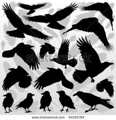 Crow And Feathers Silhouettes Illustration Collection Background. Royalty Free Cliparts, Vectors, And Stock Illustration. Crow Art, Raven Art, Bird Art, Vogel Silhouette, Crow Silhouette, Silhouette Drawings, The Crow, Raven Tattoo, Dark Tattoo