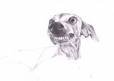 ITALIAN GREYHOUND ART. Work in progress. This is Tess. I love her smile. I really love drawing Italian greyhounds. https://www.etsy.com/shop/JimGriffithsArt?ref=hdr_shop_menu