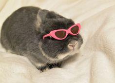 見えない感満載な三つ葉ちゃん。  Mitsuba  #rabbitstagram #rabbit #bunny #うさぎ #ネザーランドドワーフ #ふわもこ部 #pets_of_instgram #netherlanddwarf #lapin #kaninchen #blueotter #ブルーオター #bunnystagram #bunnylove #fabbunnies #lovebunny #instabunny #houserabbit #instapets #rabbitstagram #bunnystagram