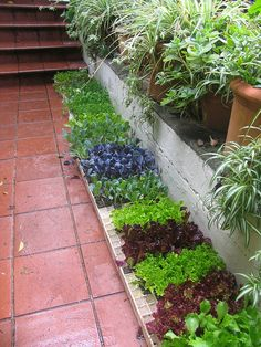 seedlings ready to be permablitz-ed by Milkwooders, via Flickr.  What an awsome border!
