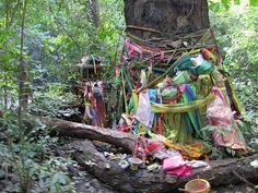 Holy Tree, Thailand
