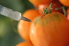 ¿Los alimentos transgénicos fueron creados para nuestro beneficio? [Video] - VeoVerde