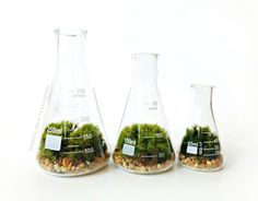 Science Beaker Terrarium Set.  I seem to be going for a beaker theme today on my Geek Girl Science Love Pinterest board....