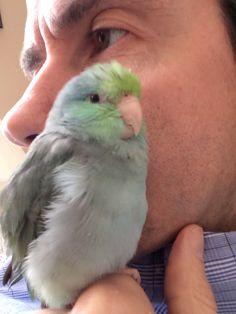 Sweet Parrotlet!