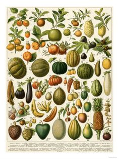 Tropical Fruits - Gicléetryck på AllPosters.se