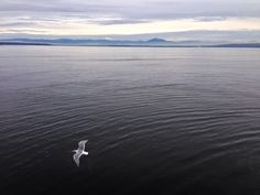1/1/14 Cascade Mountain Range from the Puget Sound. #Washington #Seattle #Whidbey #PugetSound