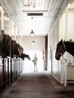 the quiet and smell of the stables with those little heads peeking your way is the best!