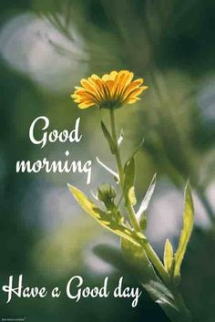 Are you searching for inspiration for good morning handsome?Browse around this website for very best good morning handsome inspiration. These enjoyable images will you laugh. Good Morning Friends Images, Good Morning Handsome, Good Morning Quotes For Him, Good Morning Beautiful Quotes, Morning Quotes Images, Morning Greetings Quotes, Good Morning Picture, Good Morning Flowers, Good Morning Messages