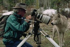 This is how real men shoot #wolves. @JamieDutcher #standforwolves