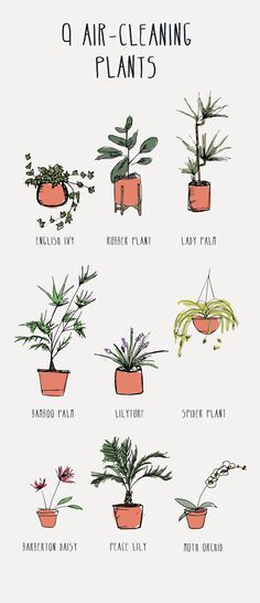 9 Air Cleaning Plants – The English Ivy, Rubber Plant, Lady Palm, Bamboo Palm, L … – House Plants Bloğ Plantas Indoor, Air Cleaning Plants, Daisy, Rubber Plant, Decoration Plante, Peace Lily, Spider Plants, Cool Ideas, Diy Ideas