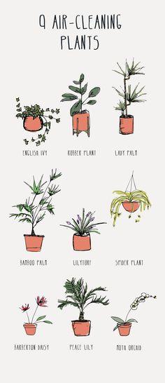 De 9 beste luchtreinigende planten. Goed om te weten voordat je je eigen urban jungle creëert! // via Noble Carriage