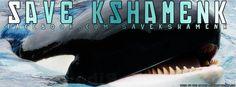 ¡Este es el último abrazo a Kshamenk! Sigue la lucha por liberar a una orca en cautiverio