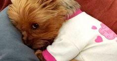 Sleep, Puppys and So cute on Pinterest