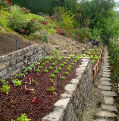 Backyard Landscaping Hillside Garden Beds Ideas For 2019 Terrace Garden Design, Hillside Garden, Vegetable Garden Design, Garden Beds, Terraced Garden, Sloping Garden, Vegetable Gardening, Garden Fencing, Garden Path