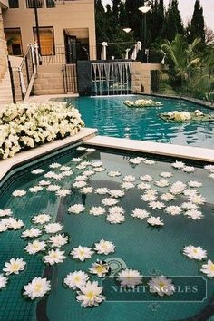 flowers in fountain/pool