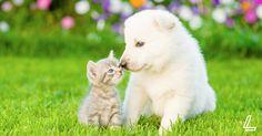 Pet-proofing tips