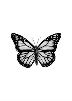 Black & White Poster Order black and white pictures online Desenio Poster S . - Black & White Poster Order black and white pictures online Desenio Poster Black White Monarch Butterfly Meaning, Monarch Butterfly Costume, Monarch Butterfly Tattoo, Butterfly Drawing, Butterfly Tattoo Designs, Butterfly Painting, Butterfly Wallpaper, Butterfly Design, How To Draw Butterfly