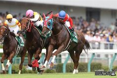ベルカント Bel Canto (JPN) 2011 Ch.m. (Sakura Bakushin O (JPN)-Celebrar (JPN) by Boston Harbor (USA) 1st Ibis Summer Dash (JPN-G3,1000mT,Niigata) (photo: Keiba Lab)