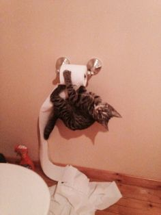 """""""I did the unrolling bit for you!"""" 