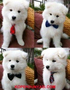 Kravatlardan hangisi yakışmış sizce ??