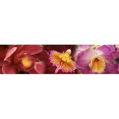 Details of red and violet Orchid flowers Canvas Art - Panoramic Images (40 x 10)