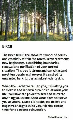 52 New Ideas For Birch Tree Quotes Forests