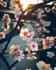 ѕσ hαppч fσr ѕσ мαич тhíиgѕ - hope you all had a good weekend and a great start this Monday. ℓσνєℓу íиѕρσ #flowers #beautiful #inspo #inspo4all #copenhagen #inspohood #copenhagenbohemeinspo #style #styleblogger #cherryblossom #sunset #april #love by copenhagenboheme